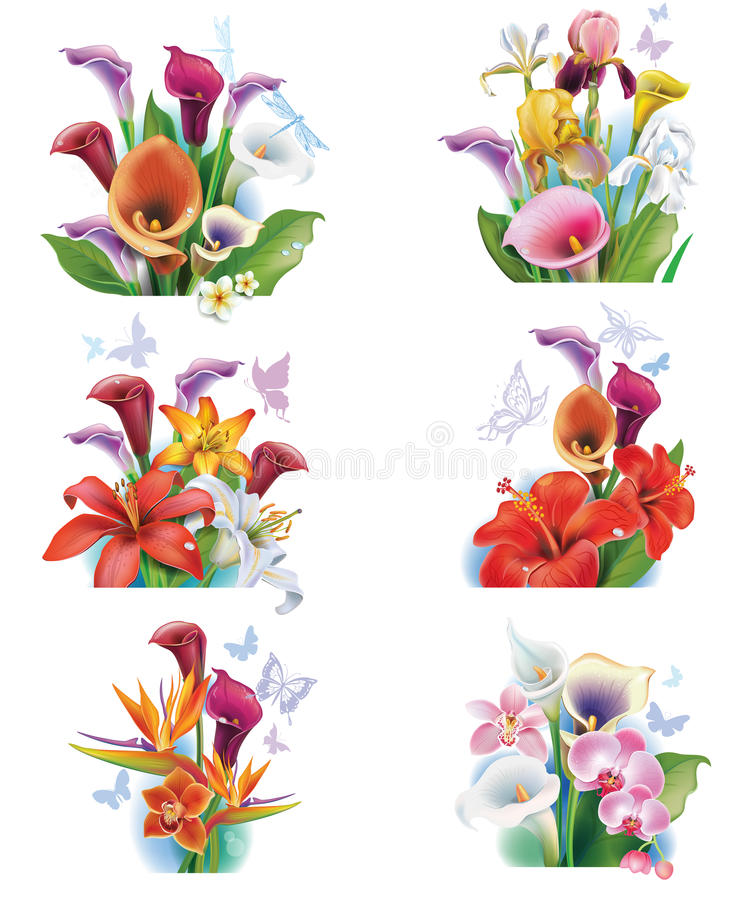Disposition des fleurs tropicales illustration stock
