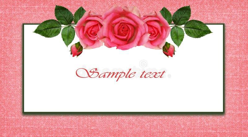 Disposition et cadre de fleurs de Rose illustration libre de droits