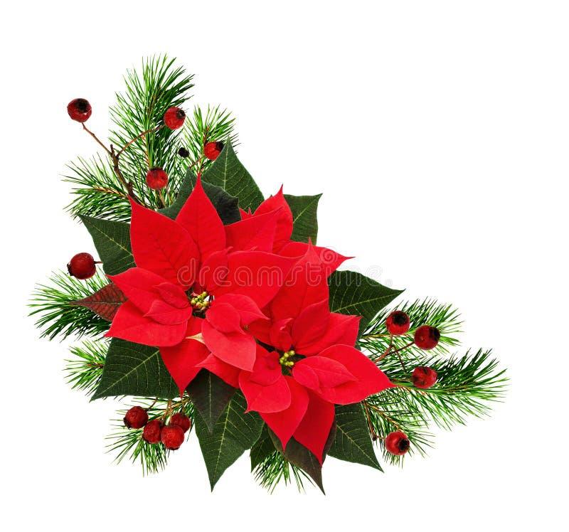 Disposition faisante le coin de Noël avec des brindilles de pin, des baies rouges et le PO photographie stock libre de droits