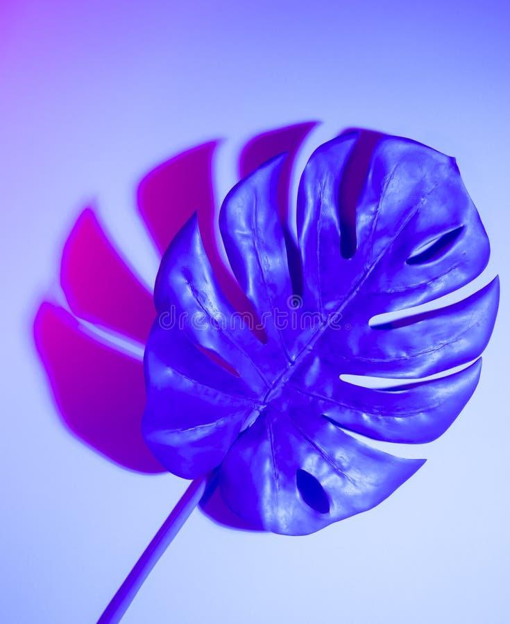 Disposition pourpre tropicale cr?ative de feuilles Concept surnaturel Configuration plate Couleurs ultra-violettes photos libres de droits