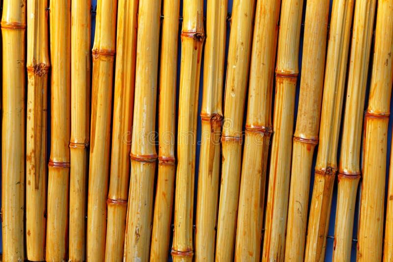 Disposition verticale en bambou de texture de fond de modèle de troncs photos libres de droits