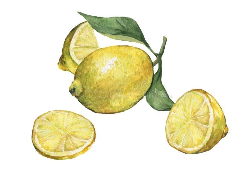 Disposizione con limone fresco della fetta e l'intero degli agrumi con le foglie verdi ed i fiori illustrazione di stock
