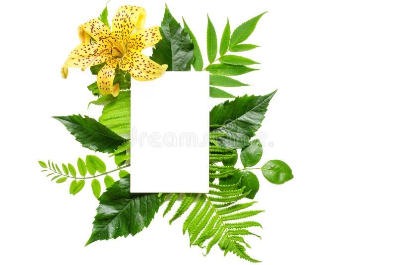 Disposizione creativa con il fiore giallo, le foglie e la cartolina d'auguri bianca in bianco isolati su fondo bianco fotografie stock libere da diritti