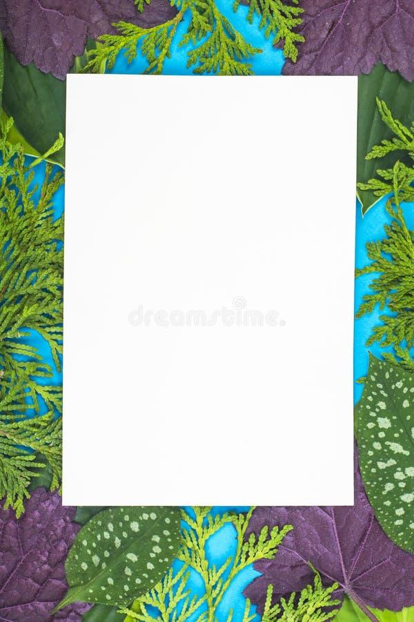 Disposizione creativa dalle foglie dei colori differenti sul backgrou blu immagine stock libera da diritti