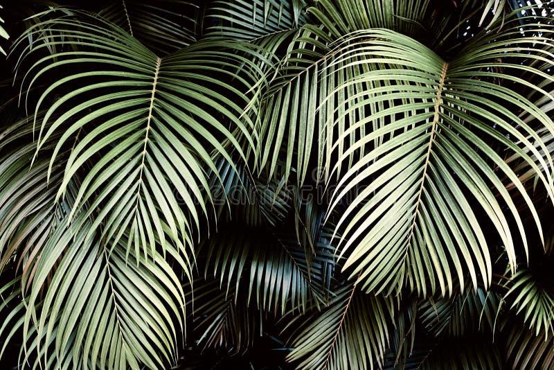 Disposizione creativa della natura fatta delle foglie e dei fiori tropicali Disposizione piana Concetto di estate fotografia stock libera da diritti
