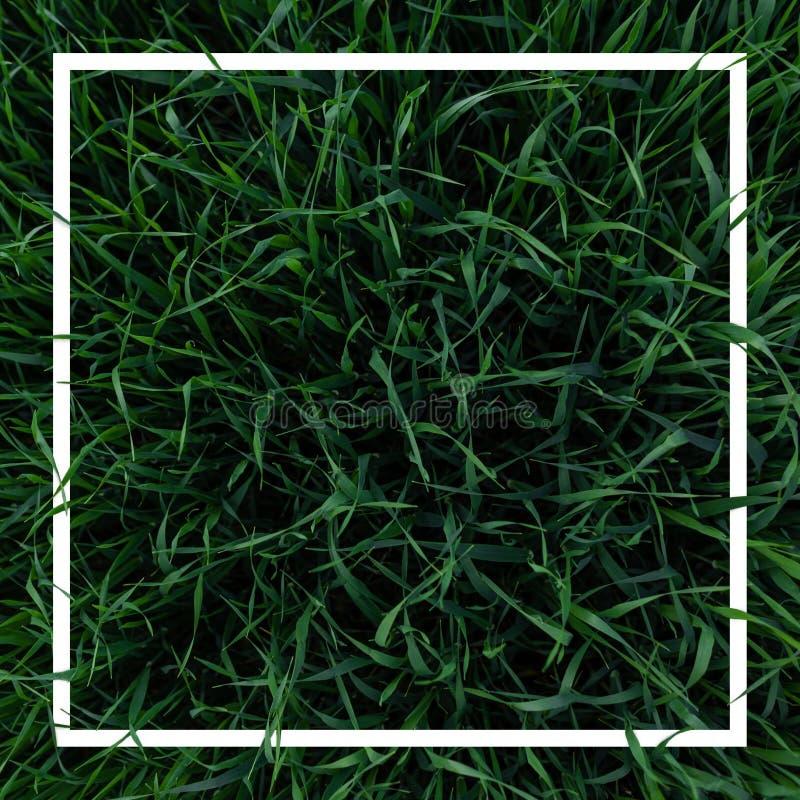 Disposizione creativa di erba verde fresca con la struttura bianca Concetto della natura minimalism Vista da sopra fotografie stock