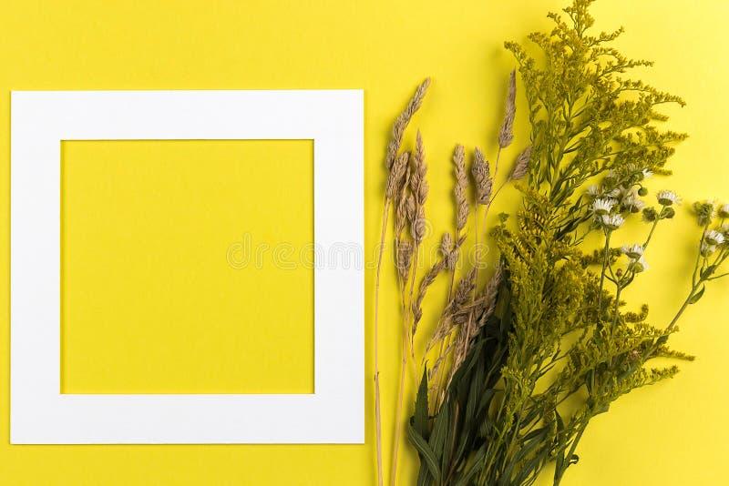 Disposizione creativa di estate fatta dei wildflowers e dell'erba asciutta su fondo giallo Concetto esotico di estate minima con  fotografia stock