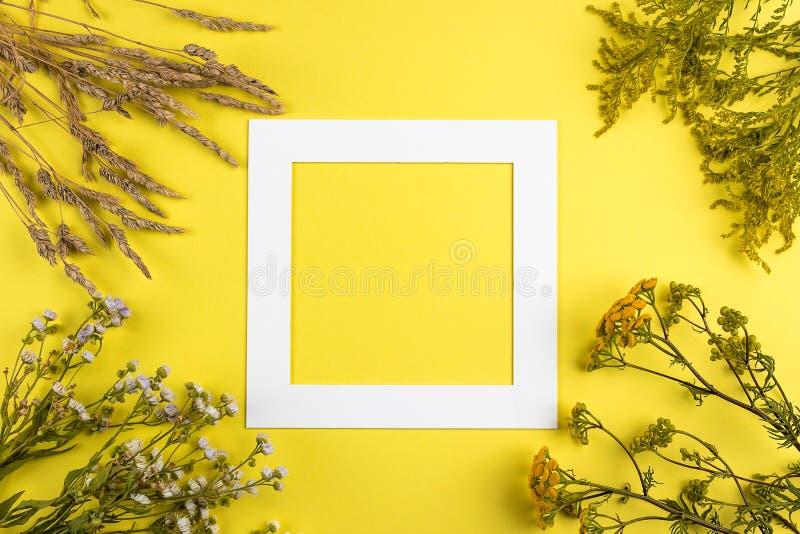 Disposizione creativa di estate fatta dei wildflowers e dell'erba asciutta su fondo giallo Concetto esotico di estate minima con  immagine stock libera da diritti