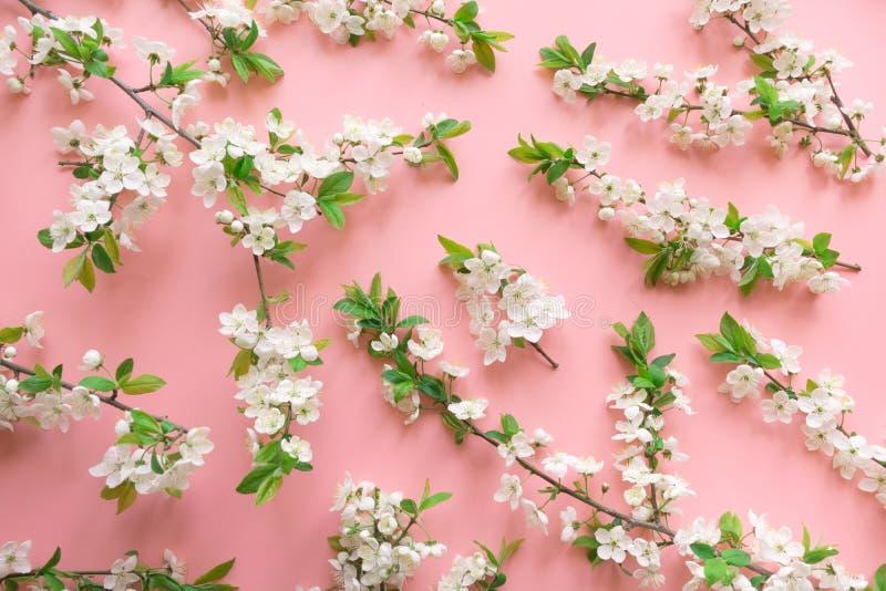 Disposizione creativa di primavera, rami bianchi del fiore della molla sul rosa pastello Reticolo floreale Vista da sopra, dispos fotografia stock libera da diritti