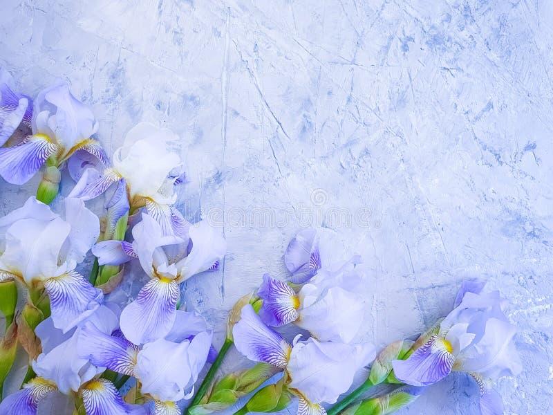 Disposizione dei fiori di fioritura dell'iride sull'annata concreta grigia della struttura del fondo immagini stock