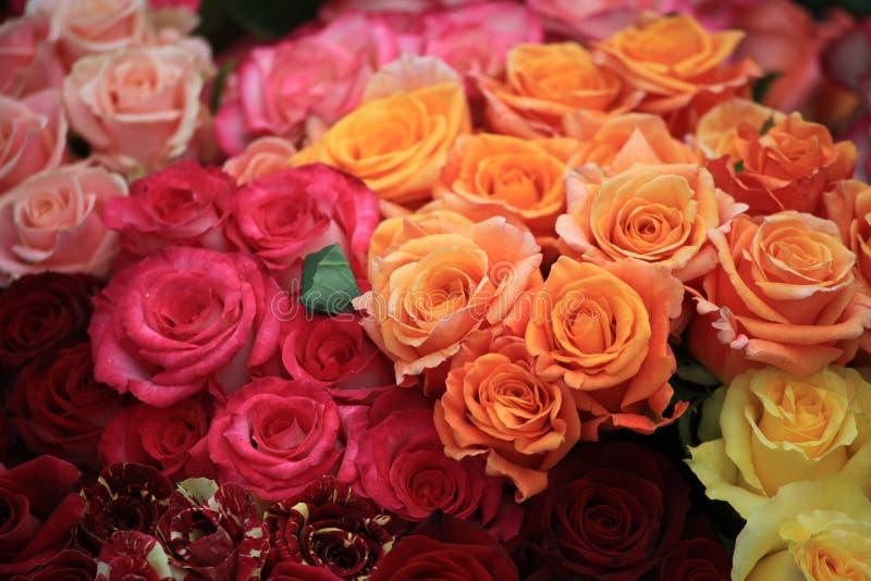 Disposizione dei fiori di molte rose immagini stock libere da diritti