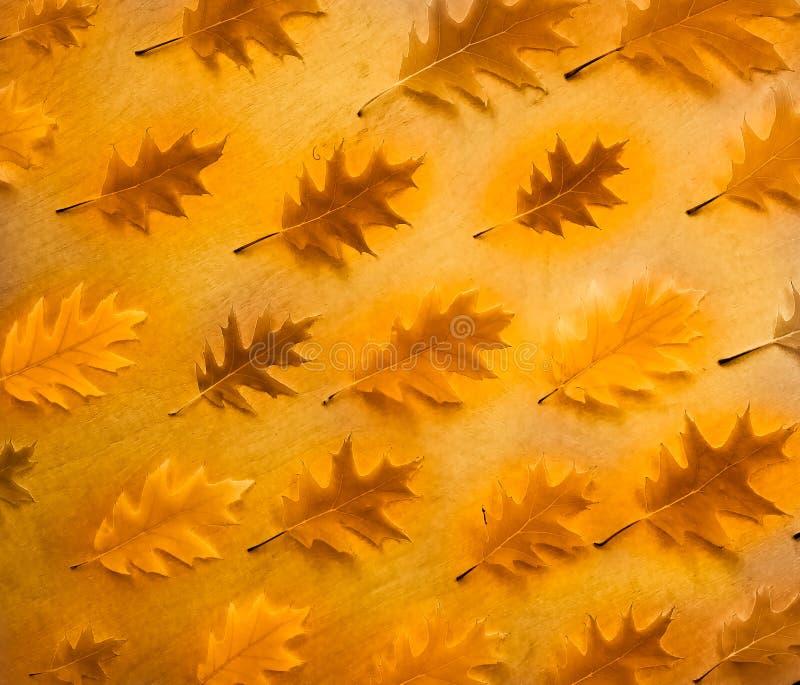 Disposizione del piano del modello della foglia della quercia di autunno, vista superiore fotografia stock