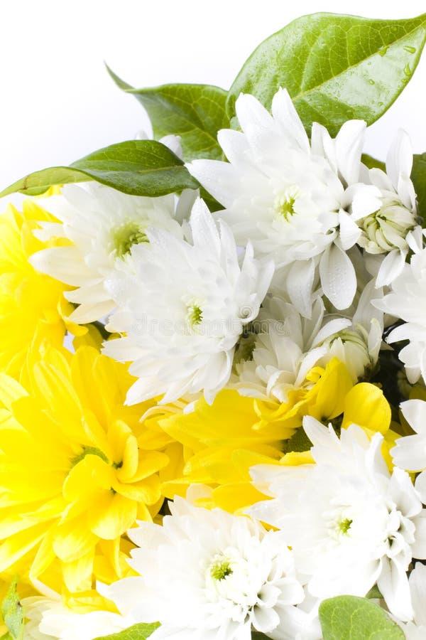 Disposizione di fiore bianca e gialla fresca fotografia stock