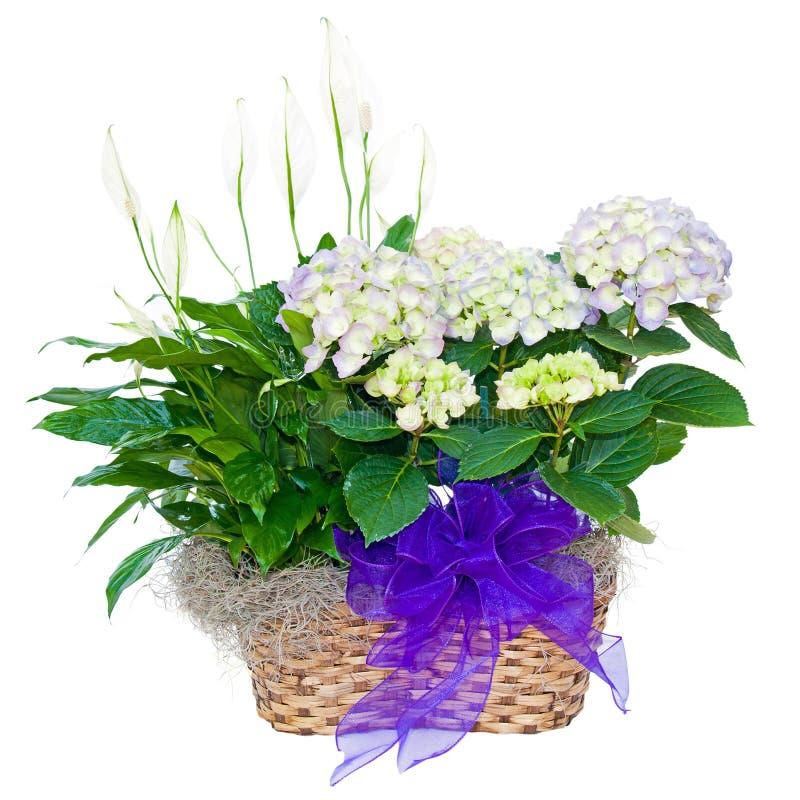 Disposizione di fiore del giglio di pace e del Hydrangea fotografia stock libera da diritti