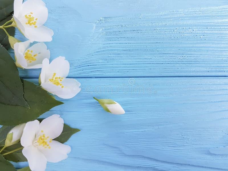 Disposizione di freschezza dei fiori bianchi della primavera su un fondo di legno blu immagini stock libere da diritti