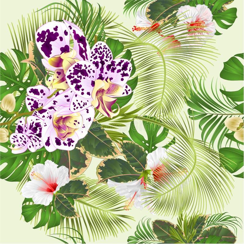 Disposizione floreale dei fiori tropicali senza cuciture di struttura, con l'orchidea macchiata e palma dell'ibisco, philodendron illustrazione vettoriale