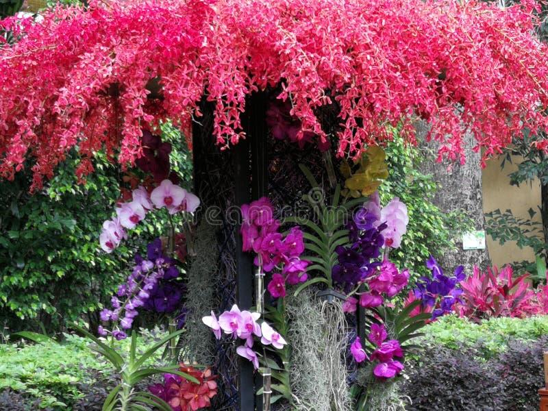 Disposizione floreale 2019 del fiore di Macao Lou Lim Ioc Garden Spring Orchids immagine stock