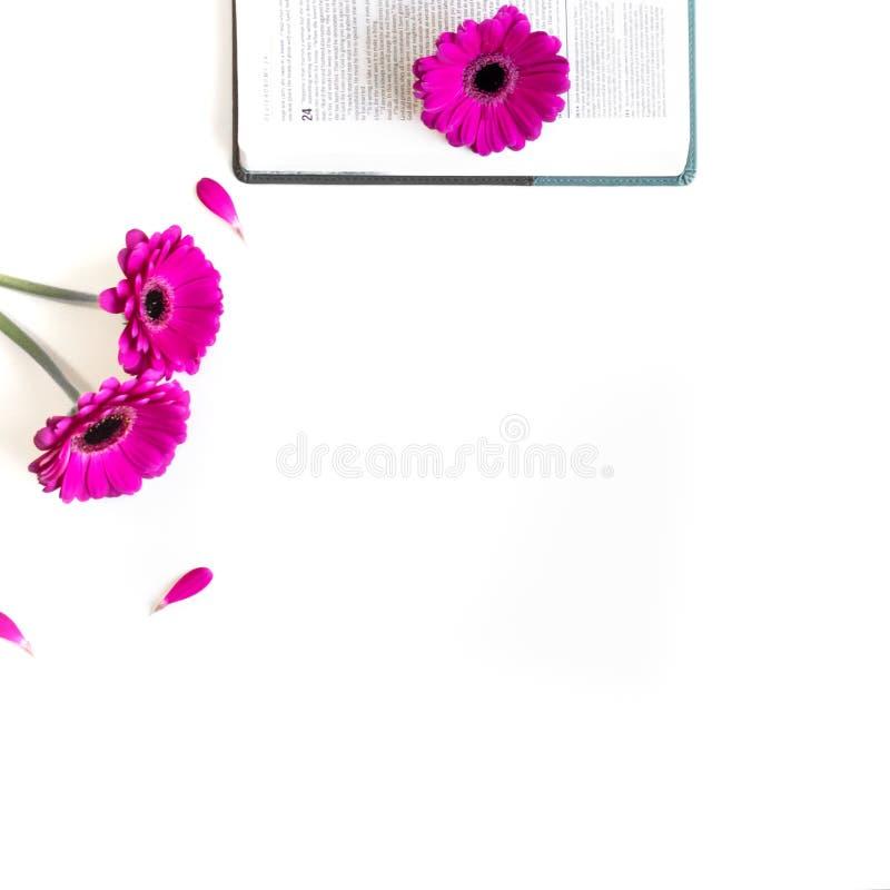 Disposizione piana: bibbia, libro e rosa aperti, porpora, violette, fiore rosso della gerbera con i petali immagini stock