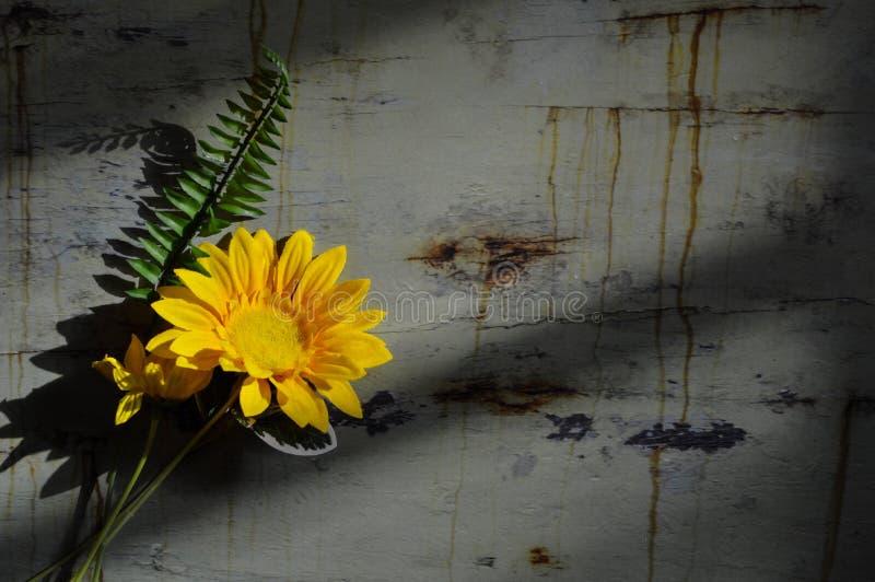 Disposizione piana del fiore giallo su fondo rustico fotografia stock