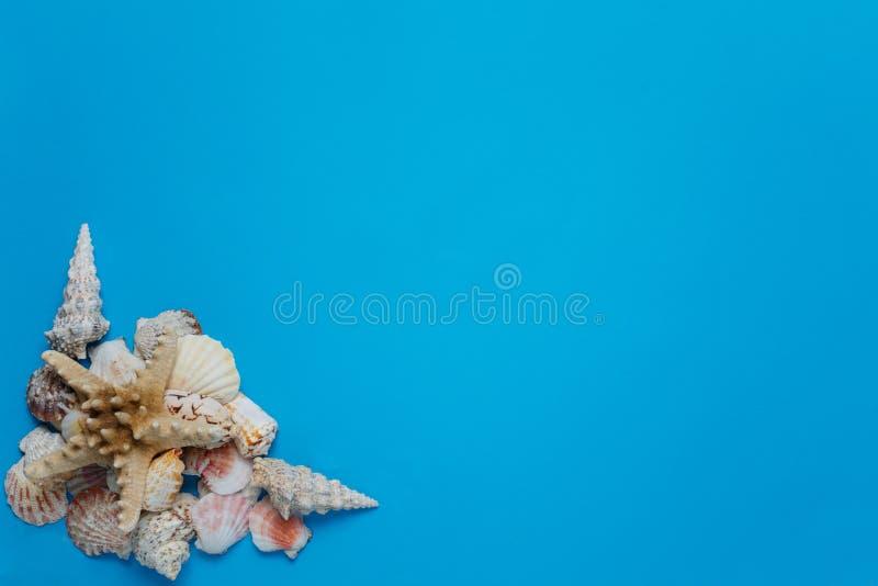 Disposizione piana della conchiglia della composizione tropicale esotica nel mucchio fotografie stock libere da diritti