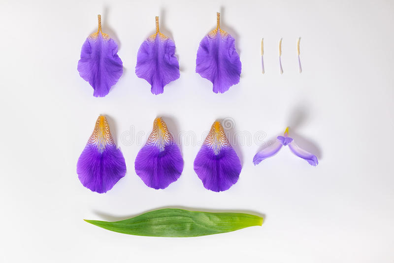 Disposizione piana di bei fiori lilla smontati e di verde dell'iride fotografie stock libere da diritti
