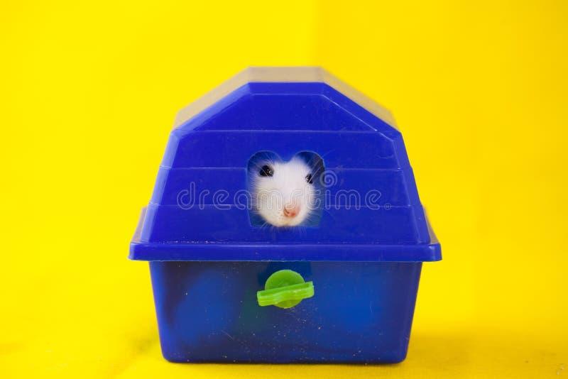 Dissimulation décorative de rat animal mignon de coloration blanc photographie stock