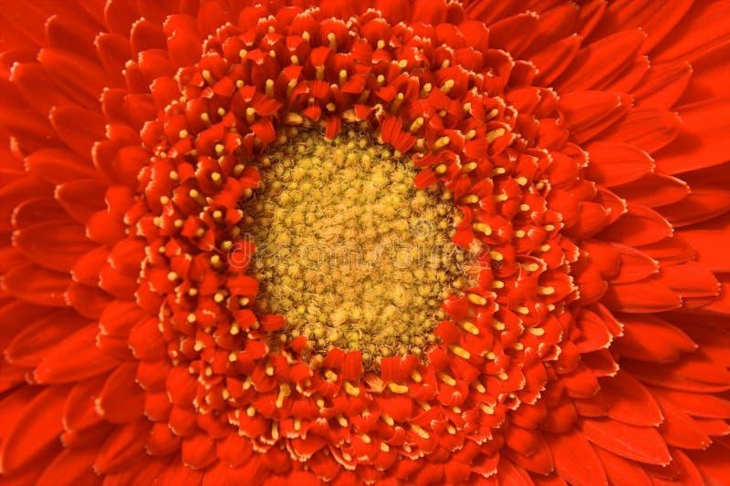 Dissolve in flower stock image