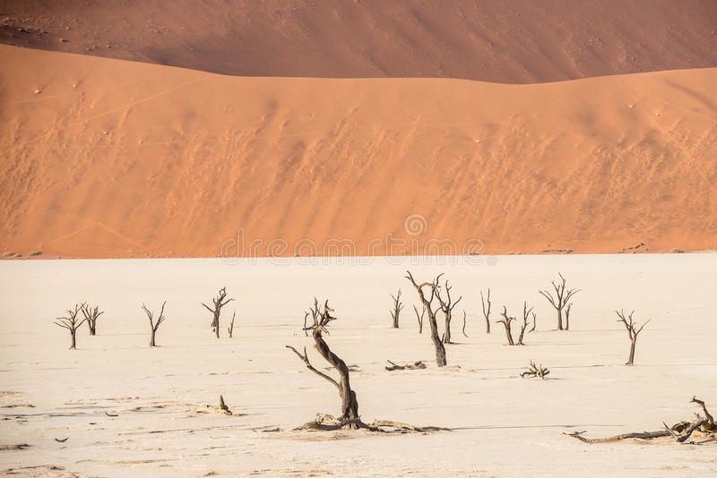 Distant dead dry trees of DeadVlei valley at Namib desert. Dead dry trees of DeadVlei valley, surrounded by multicolored huge dunes of Namib Desert royalty free stock images
