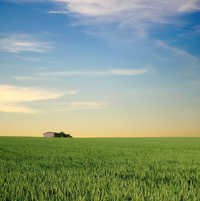 Distant farm. A small farm far across a green field royalty free stock photos