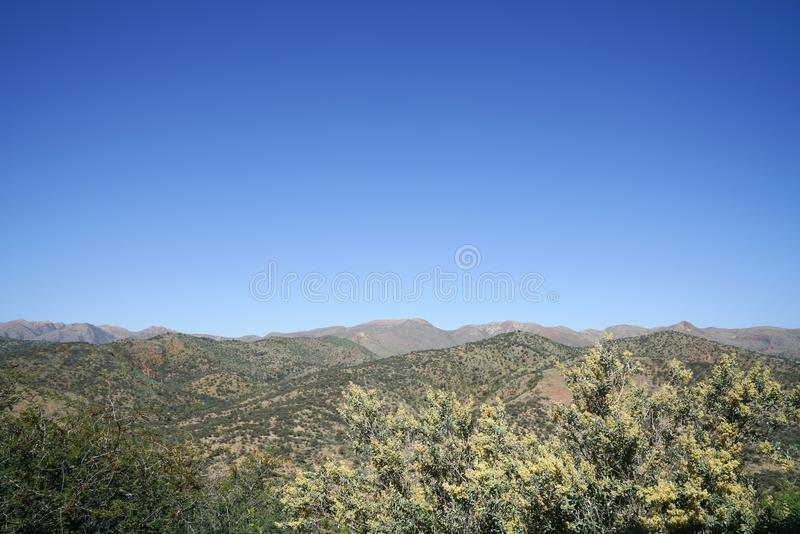 Distant rolling hills background in Namibian landscape beyond tr. Ee tops in foreground and below deep blue sky royalty free stock photo