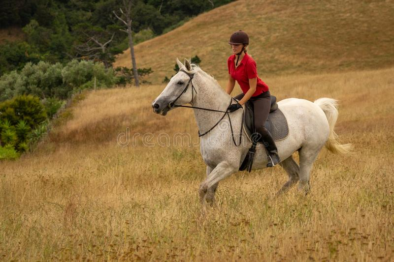 A distant shot of a beautiful happy smiling young woman dressed in a red polo shirt riding her white horse through long dried royalty free stock images