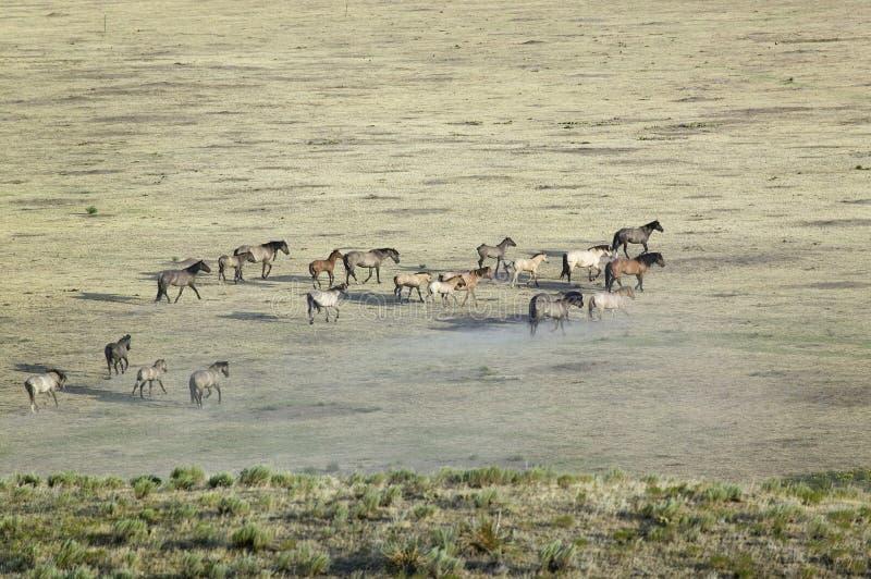 Download Distant Shot Of Herd Of Horses Stock Photo - Image: 27073732
