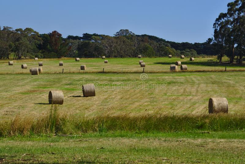 Bale of hays on meadow field. Distant view of bale of hays on meadow field on sunny day royalty free stock photo