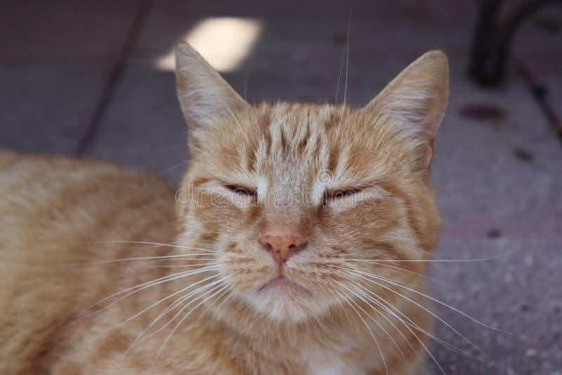 Distenda il gatto immagini stock libere da diritti