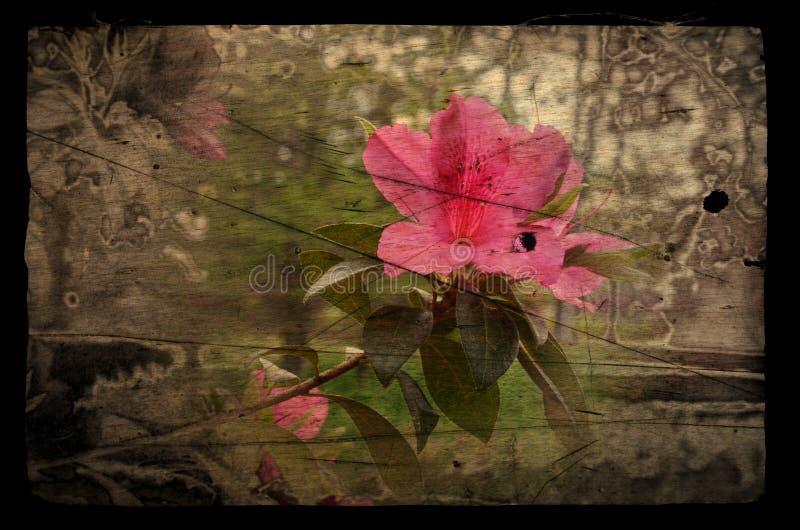 Distorcido lilly fotografia de stock royalty free