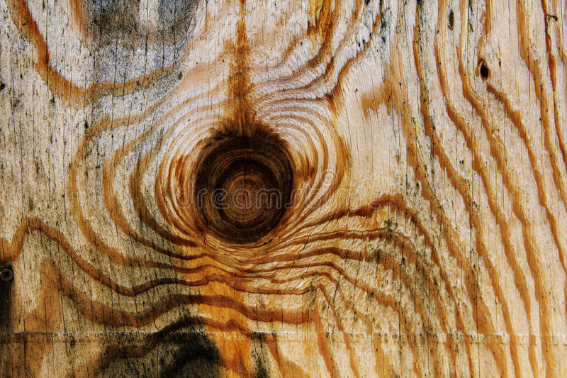 Download Knotted Wood Background stock photo. Image of knotted - 29992206