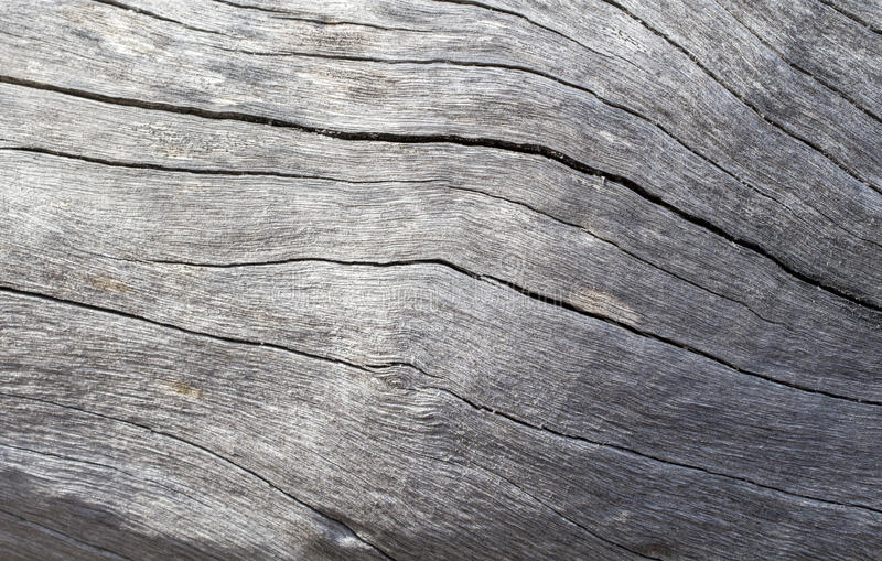 Distressed wooden texture closeup photo. Cold grey wood background. White old tree near the sea. Curves and cracks on rustic timber. Rough timber texture. Sea royalty free stock photos