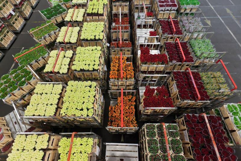 Distribution à un marché de fleur et de plante image libre de droits