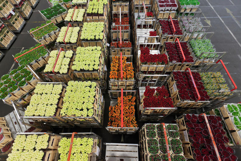 Distribution at a flower and plant market royalty free stock image