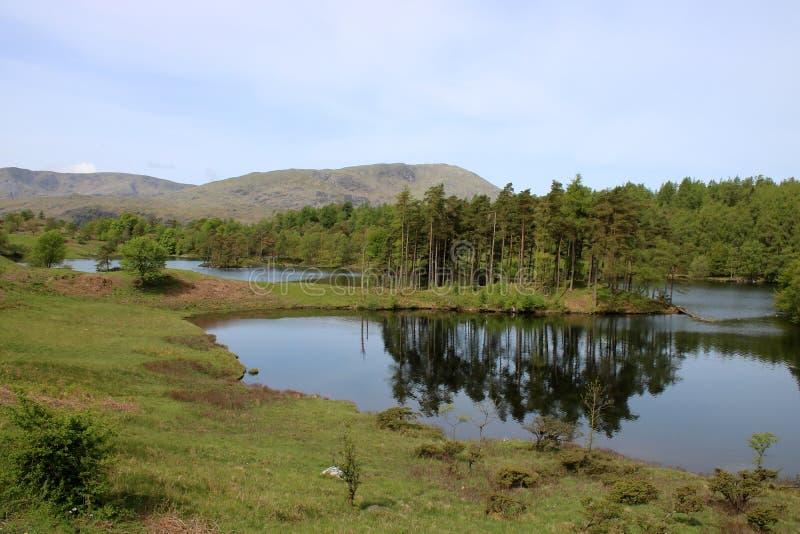 District van het het meer het Engelse Meer van de Tarn Hows, Cumbria stock foto