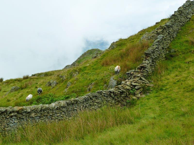 Distrito del lago que pasta ovejas imágenes de archivo libres de regalías