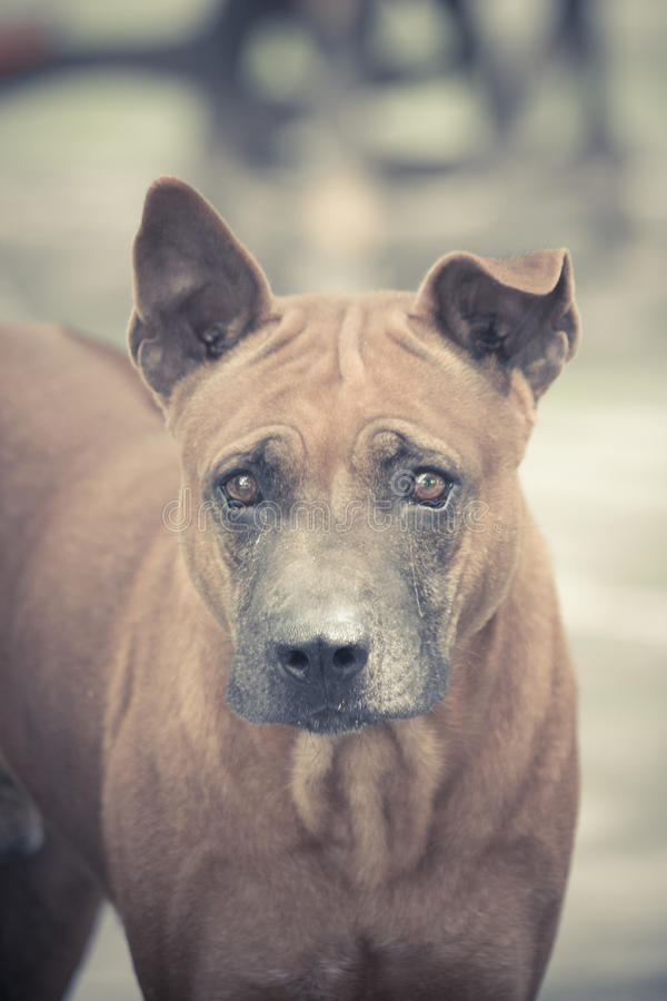 Distrust looking. A dog look distrust and angry stock photo