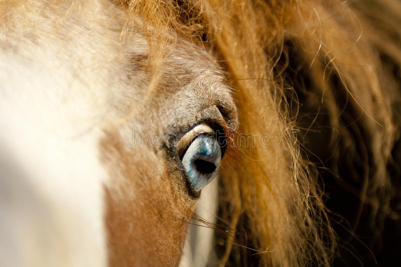 Disturbing horse eye. A picture of a disturbing horse blue eye royalty free stock photos