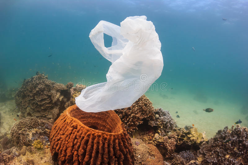 A disused plastic bag drifts past a sponge on a coral reef. A torn plastic bag drifts over a tropical coral reef causing a hazard to marine life such as turtles