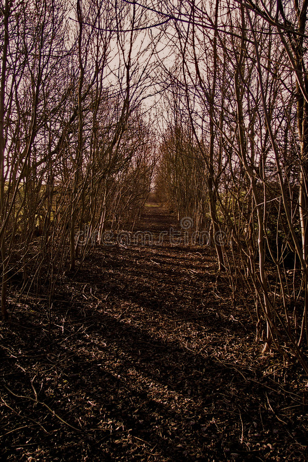 Download Disused railway stock photo. Image of lane, woodland, path - 148918