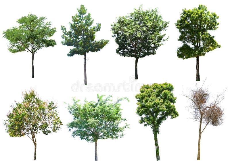 Dit beeld is geïsoleerd van dode bomen op de witte achtergrond royalty-vrije stock foto's