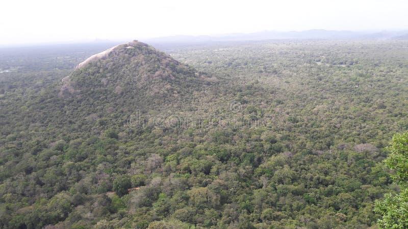 Dit is een bosbouwsysteem in Sri Lanka royalty-vrije stock foto's