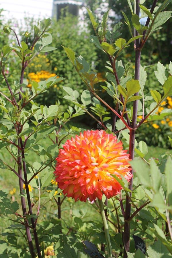 Dit is een oranje bal van geluk stock foto