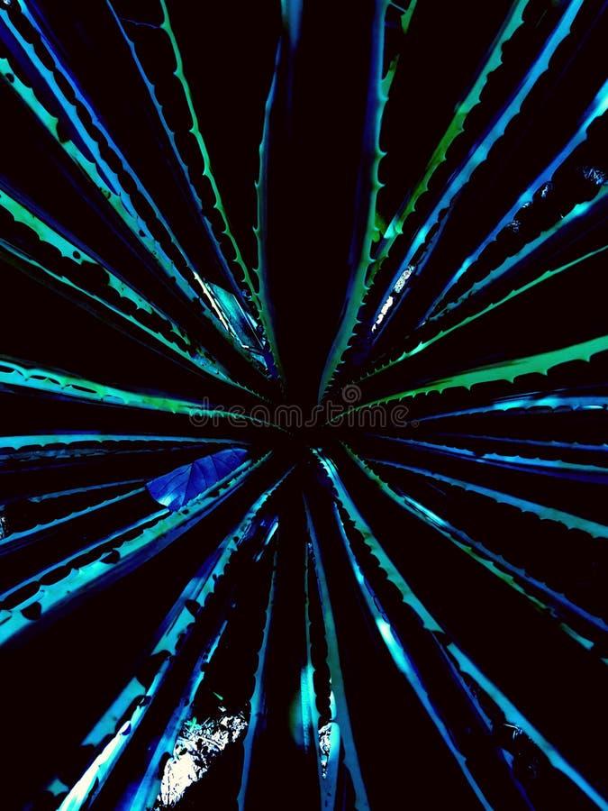 Dit is een soort sisalinstallatie, gelijkend op ananasbladeren stock fotografie