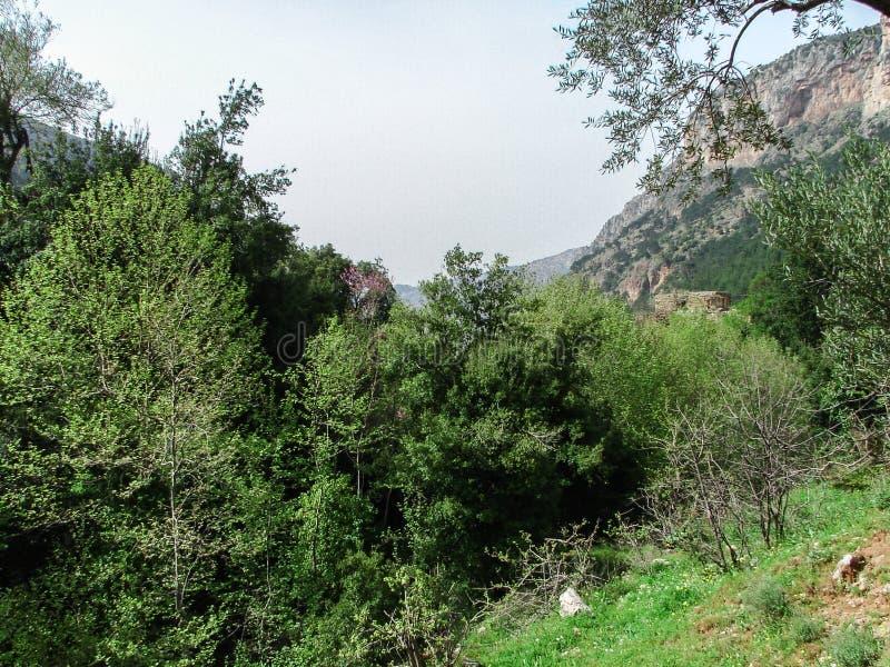 Dit is een Vallei in hoogtepunt het Noord- van Libanon van bergen, waterval en holen stock foto's